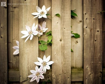 Fenced Clematis blossom - Fine Art Photograph, Nature Photography Print, Fenced Clematis Wall Art, Home Decor, Brown and White Wall Art