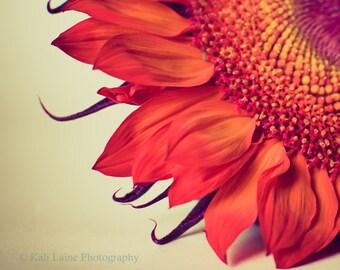 Fire - Fine Art Photography Original Print, Fire Red Sunflower Macro Nature Photography Print, Cream Red Wall Art, Home Decor, Nature Art