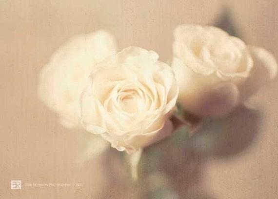 Antique Roses  - Fine Art Photography Original Print