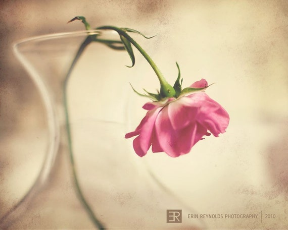 The Melancholy Rose - Fine Art Photography Original Print