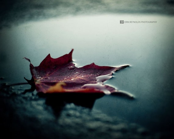 Fading Into Fall - Fine Art Photography, Burgundy Teal Wall Art, Nature Leaf Water Photography Print, Home Decor, Art