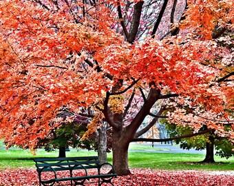 Autumn fine art photography print 8X10