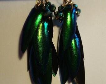 Elytra Glam Earrings