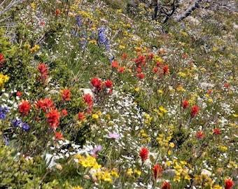 Dryland Wildflower Mix 10,000 Seeds 9 Grams