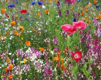 Low Growing Wildflower Mix 10,000 Seeds 9 Grams