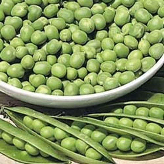 Peas Little Marvel 100 Seeds