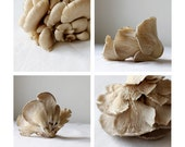 Oyster Mushroom Series, 4 Fine Art Prints - Food Photography  - Kitchen Art
