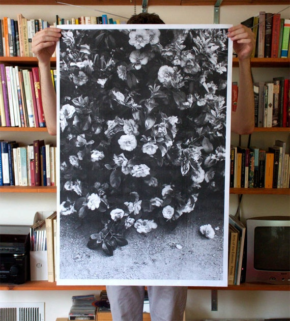 Flowers Poster 24x36