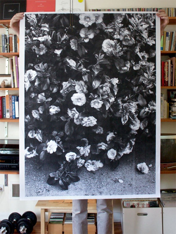 Flowers Poster 36x48
