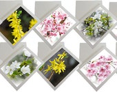 Set of 10 Spring Flowers photo greeting cards in box