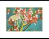 Distinguished Peach Blossom - 8x12 Fine Art Photography Print