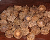 100  White Oak Natural Earth Acorn Caps, Tops for Crafts or Felted Christmas Ornaments