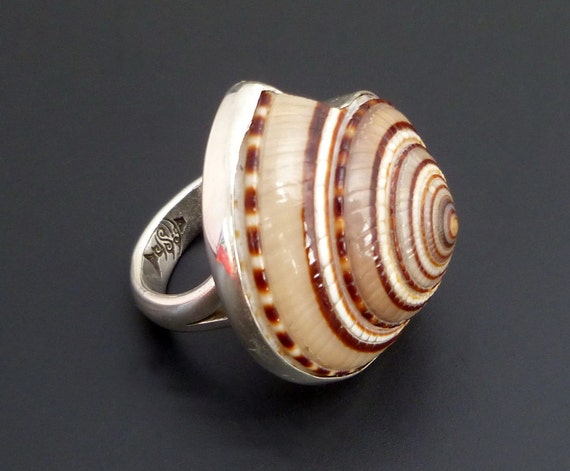Sterling Silver Shell Ring - Handmade Silver Statement Ring with Spiral Brown Toned Shell - made to order