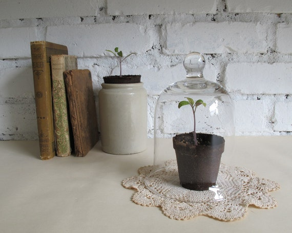 RESERVED///Vintage Glass Cloche, Natural History Home Decor