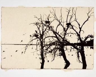 Redhill Egrets-etching