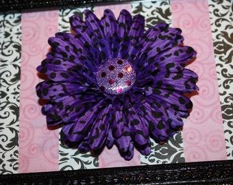Purple Cheetah Flower