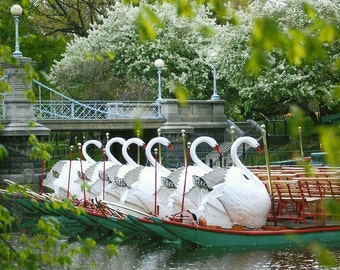 Boston Swan Boats, Canvas Wrap, Boston Photography, Home Decor, New England Decor, Boston Decor, Guest Room, Childs Room, Swan Nursery Art