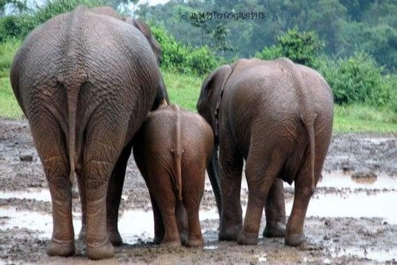 Elephants Photograph, 4x6 Photograph, Childs Room Art, Animal Photography, Kenya Africa, Small Art, Fun Casual, Bathroom Art, Playroom Decor