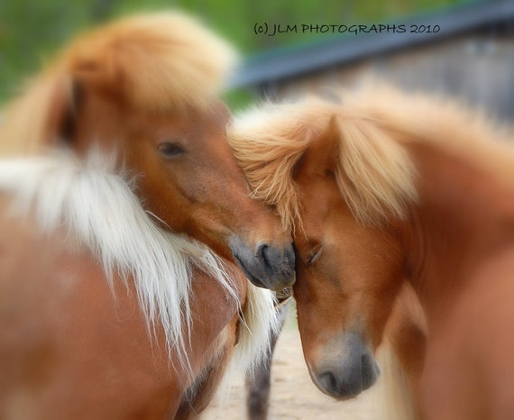 Horse Photography, Girls Room, Dorm Decor, Icelandic Horses, Equine Photography, Equestrian Decor, Bedroom Wall Art, Gifts for her, Under 35