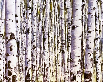 Colorado Aspen Forest Print, signed and matted
