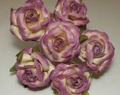 Cream Plum Roses