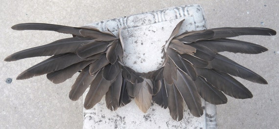 HOLDING Wild Eagle Wings REAL FEATHERS Adult size small-med