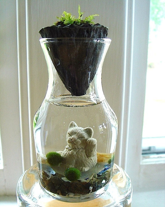 SALE Nano Marimo Balls and Lotus Maneki Neko Lucky Cat Terrarium