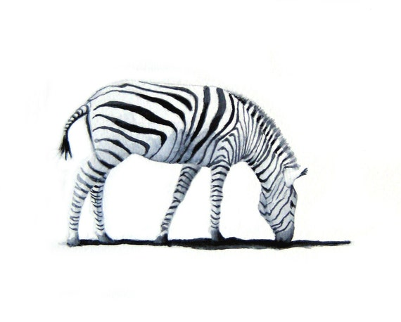 Grazing Zebra - Art Print of my Original Watercolor Painting - minimalist black and white zebra, zebra stripes, wildlife
