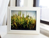 Winter Withered Grass 8x10 Photography Print, Nature Photo Wall Decor - thebqe