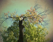 Green Tree of Mysticism 5x7 Photography Print, Woodland Fantasy Wall Decor, Rustic Decor