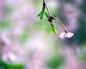 Whimsical Purple Flower 8x8 Photography Print, Flower Photo, Floral, Autumn Cherry Tree