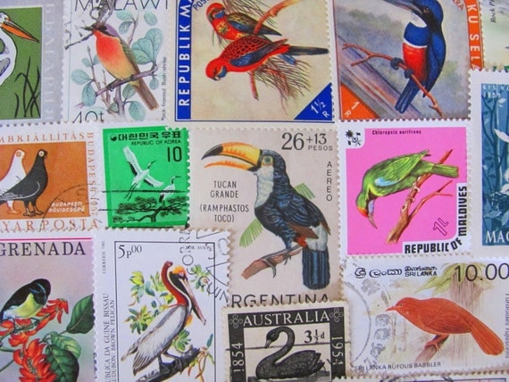 50 Fine Feathered Friends Vintage US and Worldwide Postage Stamps Philately Ornithology Falcon Black Swan Parrot Toucan Owl 2
