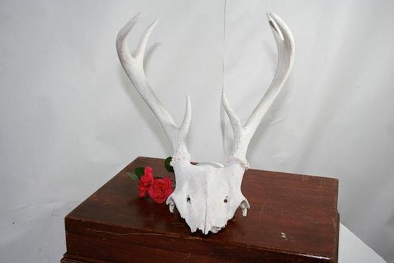 Deer Antlers White