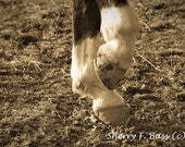 Happy Feet Matted 5x7 Photograph