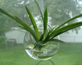 Hanging Ornament Vase- Clear Borosilicate Glass- Hand Blown- Rooting or Cutting Vase
