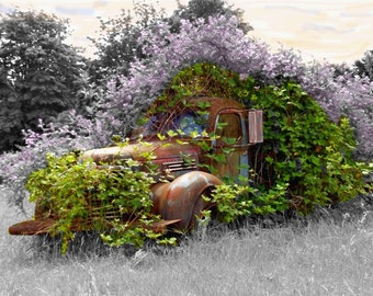 Springtime at the Rusty Blackberry Truck covered in Lilac flowers 8x10