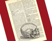 Skull Illustration Print on Antique 1896 Dictionary Book Page