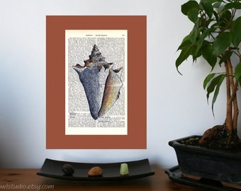 Big White Shell Art Print on Antique 1896 Dictionary Book Page