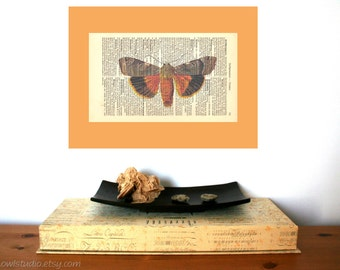 Orange Moth Vintage Art Print on Antique 1896 Dictionary Book Page