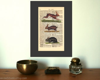 Bunny Alert Vintage Art Print on Antique 1896 Dictionary Book Page