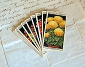 Flower Culture in Pots  Wills Cigarettes Cards