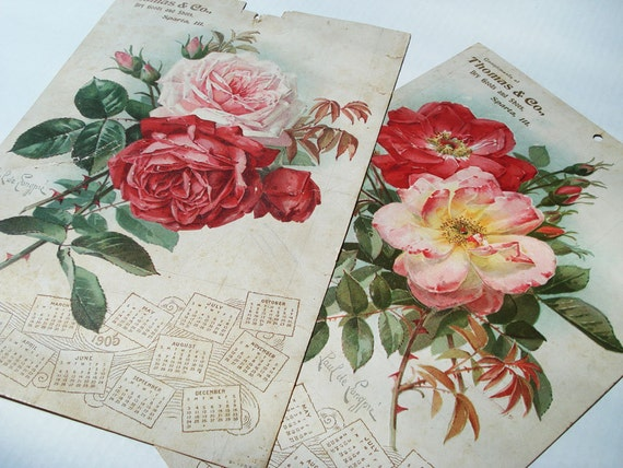 2 Antique 1905 Calendars Large Size with Litho of Roses from Thomas & Co. Dry Goods and Shoes, Sparta Illinois