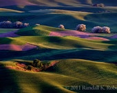 Photograph of sunrise on rolling hills, Palouse Country, Washington