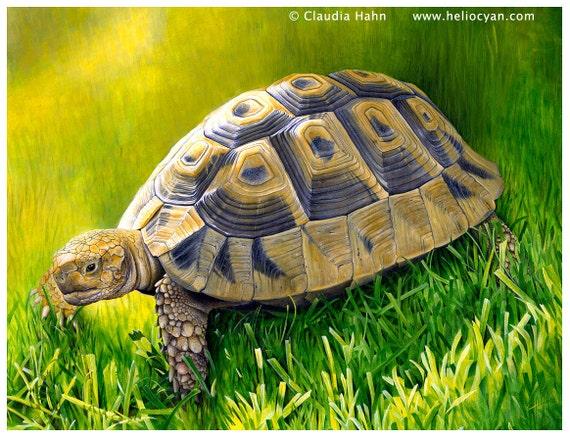 A4 PRINT 'Tortoise Tamina'