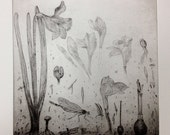 """Daffodils and Dragonflies - Drypoint of magical garden 10 x 10 """""""