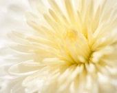 Macro Photograph Chrysanthemum 5 x 7 Sunny Day Summertime Spring Happy Cheerful Close Up Nature Imagery Sunshine Bright Happy Art