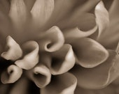 Macro Photography Dahlia Flower Print 5 x 7 Spring Summer Sepia Bold Contrasty Art Affordable Home Decor Wall Art