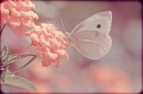 Sweet Pastel Art 4 x 6 Photograph Nature Print Butterfly Flowers Spring Summer Faded Ethereal Dreamy Chic Cottage Boho Home Decor Fine Art