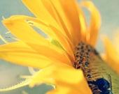 Sunflower Photograph - The Sun King - 11x17 Fine Art Photograph - Bumblebee & Sunflower, Golden Yellow, Grey Blue, Dreamy Summer