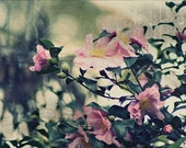 Wild At Heart - 8x10 Fine Art Photography - Windswept Wild Roses, Pink Home Decor, Shabby Chic, Coastal Cottage, Summer Garden Gifts
